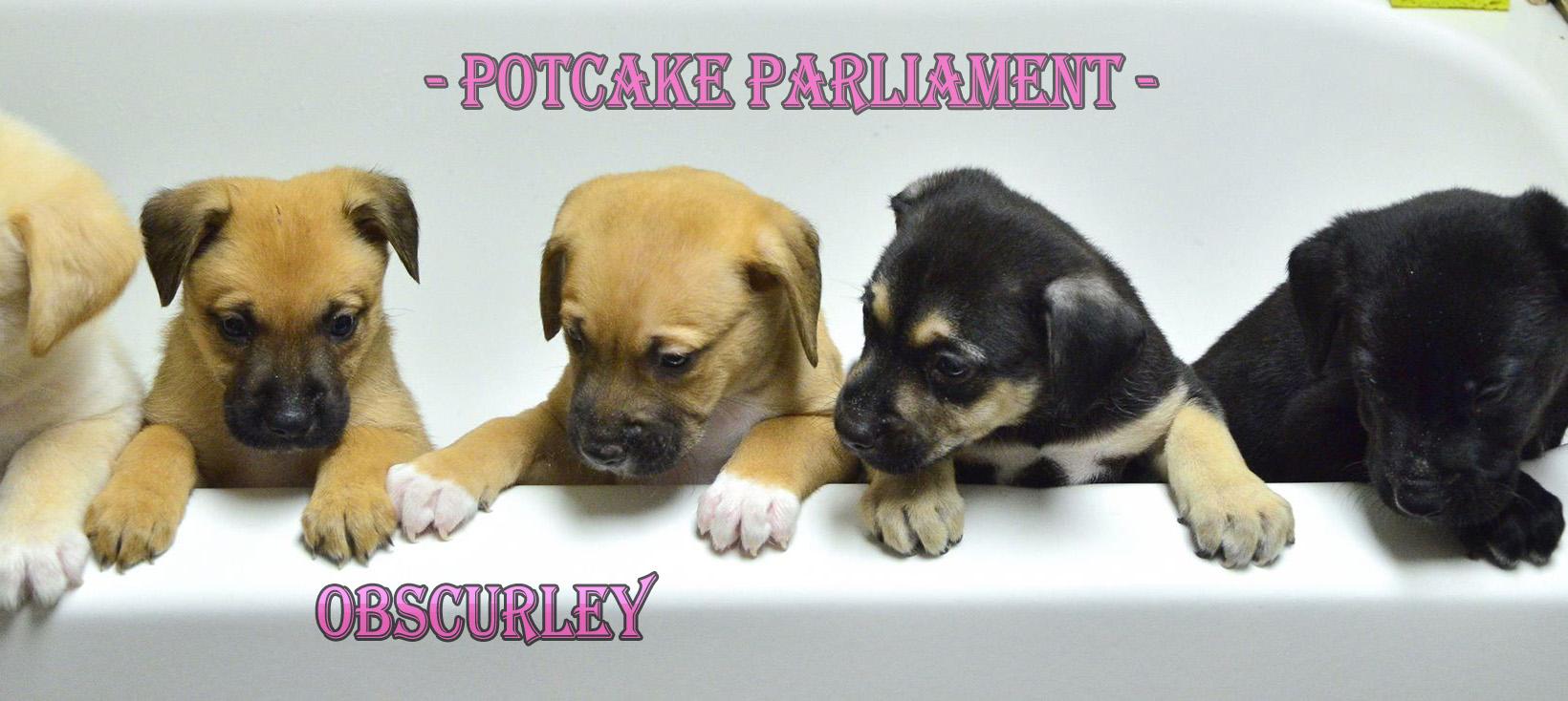 Potcake Parliament
